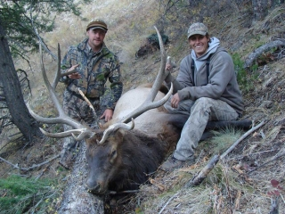Bull Elk - Middle Fork Salmon River - Idaho Wilderness Company - American Adrenalin Company