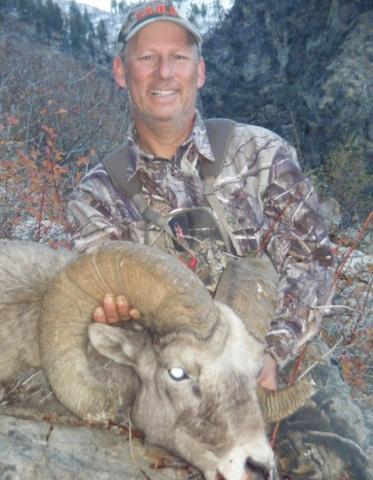 Idaho Big Horn Sheep - Middle Fork Salmon River - Frank Church River of No Return Wilderness