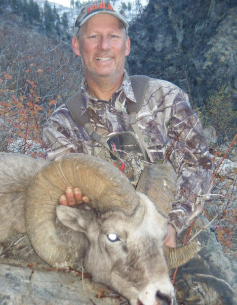 Idaho Big Horn Sheep - Middle Fork Salmon River - Frank Church River of No Return Wilderness