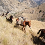 Packing Gear in and bodies out of the Frank Church Wilderness. Idaho Wilderness Company - Outfitter Steve Zettel