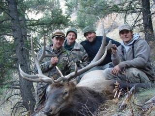Rocky Mountain Bull Elk - Idaho Wilderness Company - Middle Fork of the Salmon River - Outfitter Steve Zettel