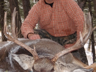 Mule Deer - Frank Church River of No Return Wilderness - Idaho Wilderness Company (formerly Taylor Ranch Outfitters)