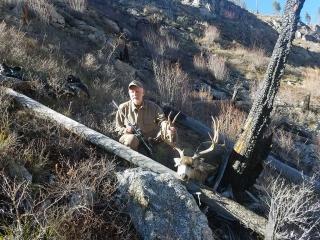 Idaho Mule Deer picture taken in unit 26 - Idaho Wilderness Company