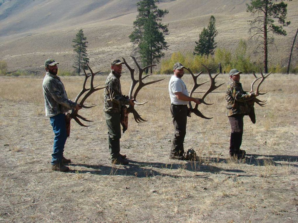 Trophy Elk Racks - Frank Church Wilderness - Middle Fork of the Salmon River - Idaho Wilderness Company - Outfitter Steve Zettel