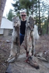 Two Grey Wolves - Idaho Unit 27 - Idaho Wilderness Company - Outfitter Steve Zettel
